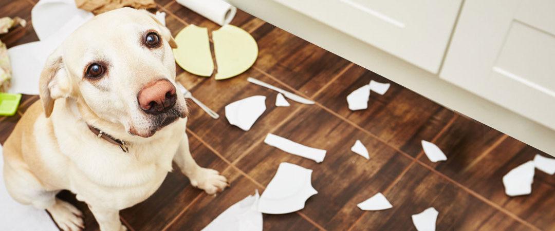 Does Ignoring Bad Behaviour Work?