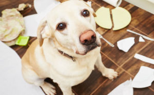 dog-behaviour-training-sit-drop-stay.jpg