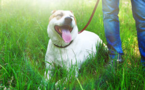 dog-training-success-stories-reviews.jpg