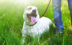 smiling-dog.jpg