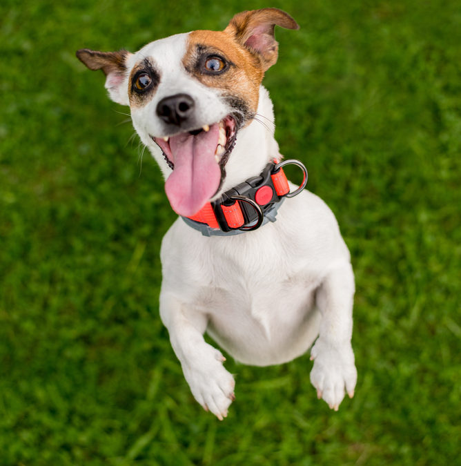 Is Your Dog Excited Or Stressed?