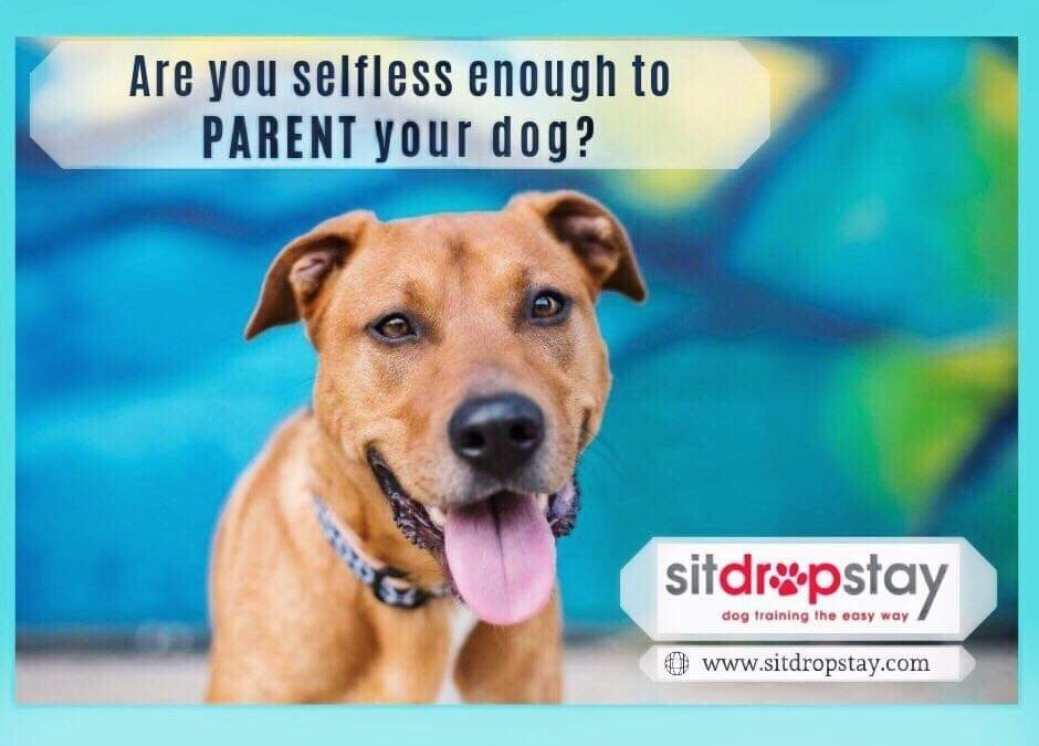 Are you raising a well-adjusted dog?
