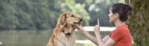 Dog Training Central Coast