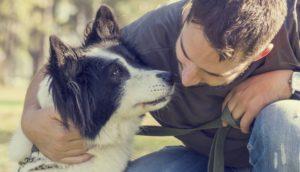 dog training Melbourne