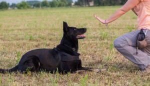 mobile dog training melbourne