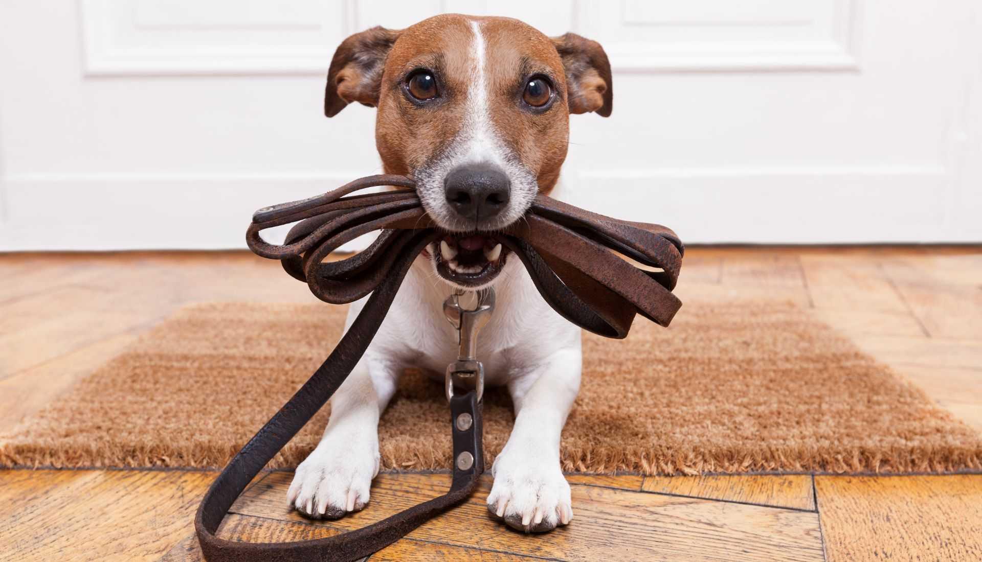 Mobile Dog Training Adelaide
