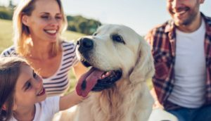 mobile dog training central coast
