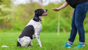 mobile dog training school