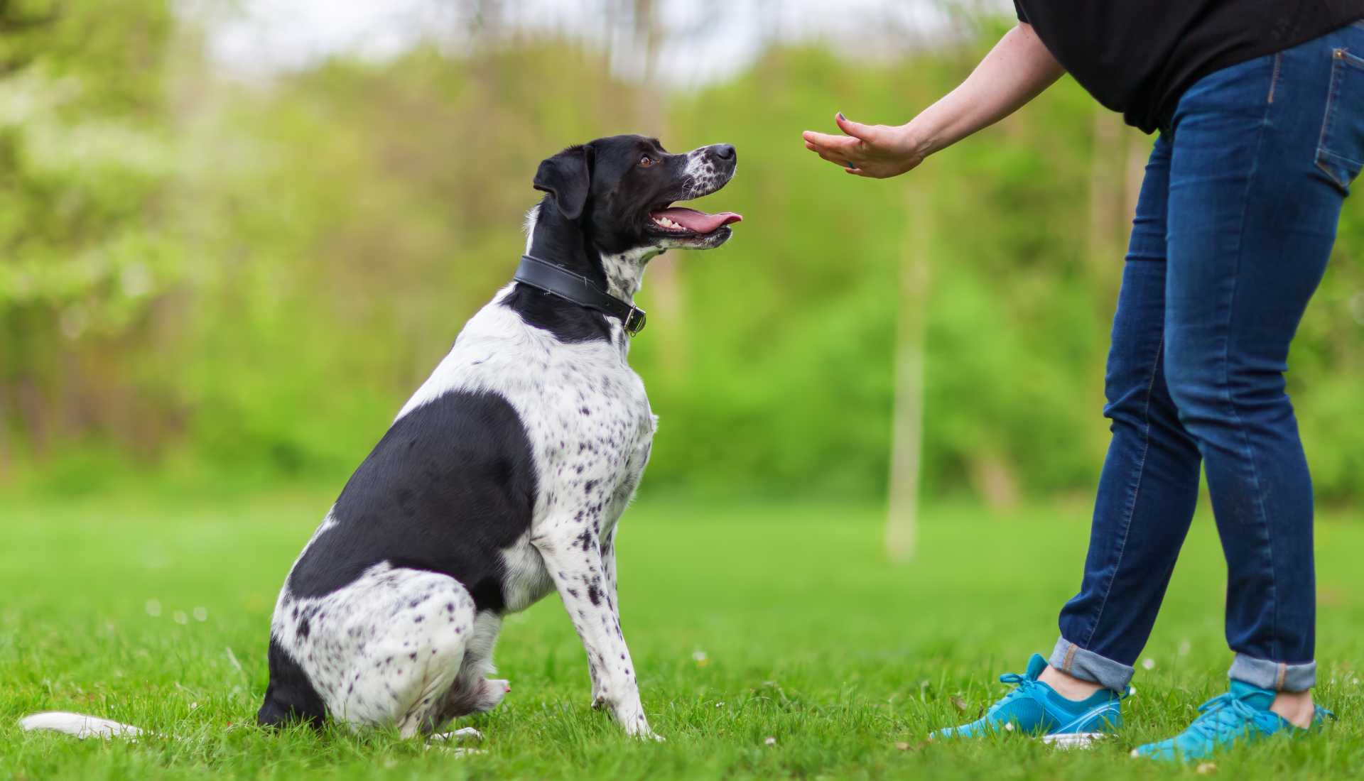 Mobile Dog Training Adelaide