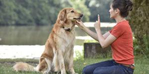 Dog Behaviour Training Melbourne