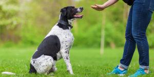 Dog Behaviour Training Brisbane