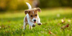 Melbourne Dog Training School