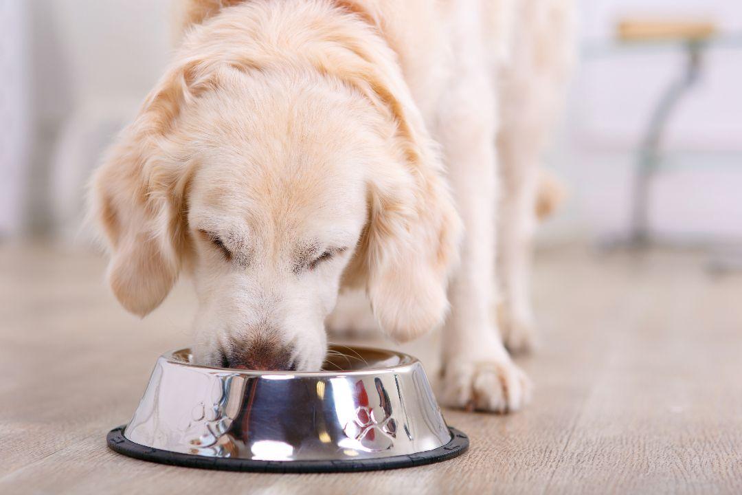 dog eating disorders