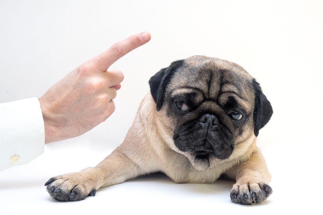 dog behaviour training