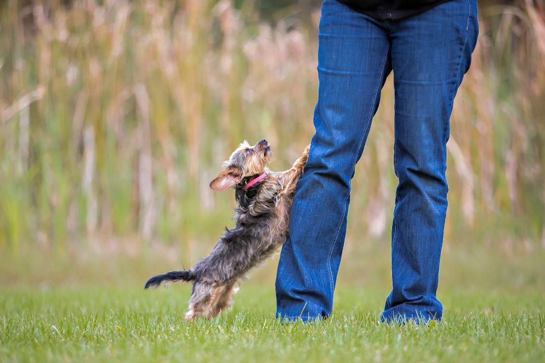 stop_dog_jumping