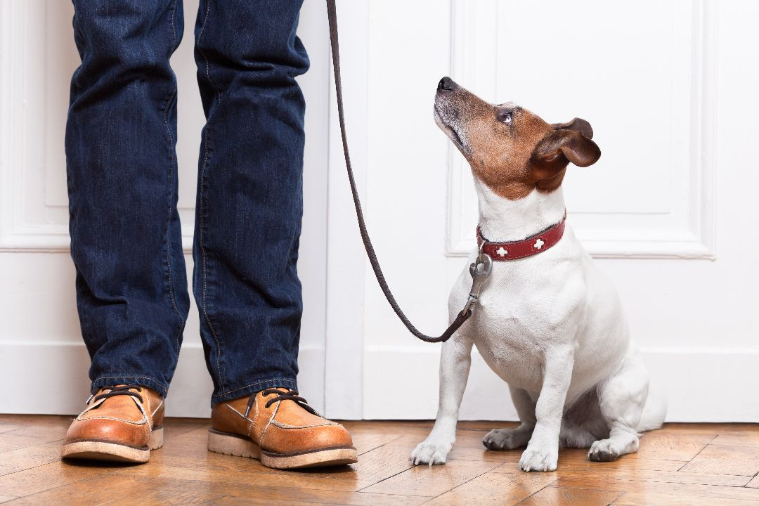 The_Benefits_Of_In_Home_Dog_Training